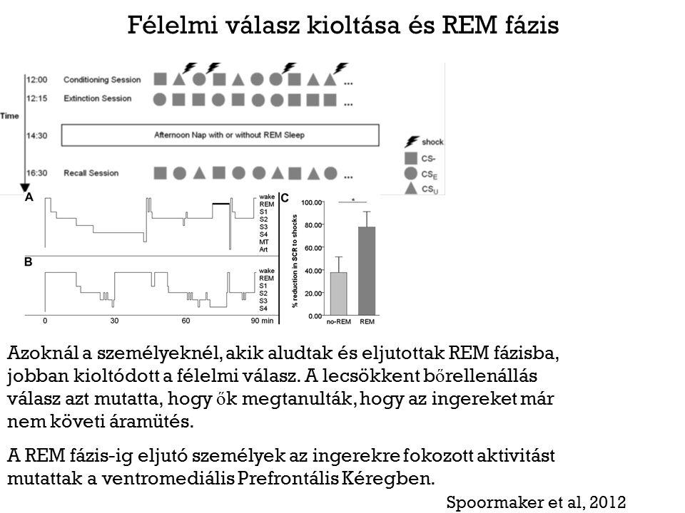 Félelmi válasz kioltása és REM fázis