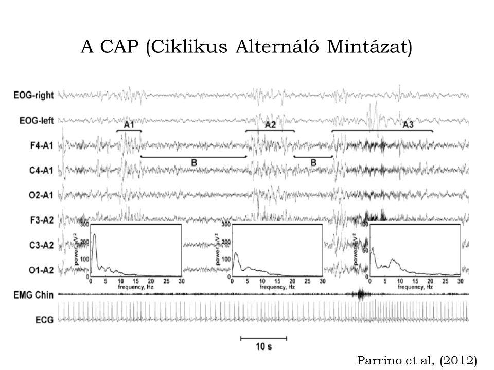 A CAP (Ciklikus Alternáló Mintázat)