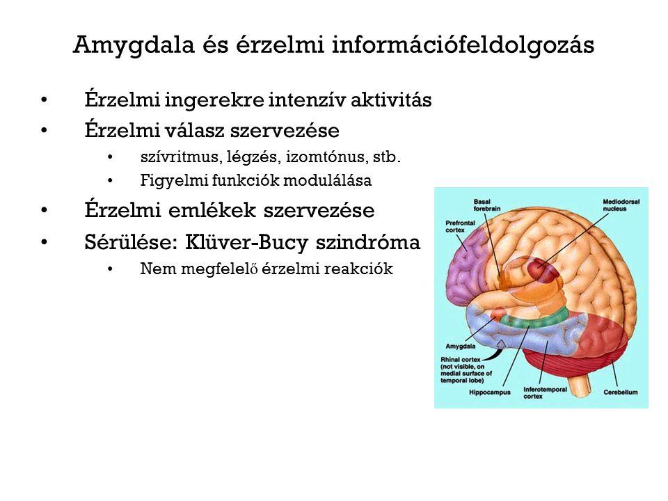 Amygdala és érzelmi információfeldolgozás