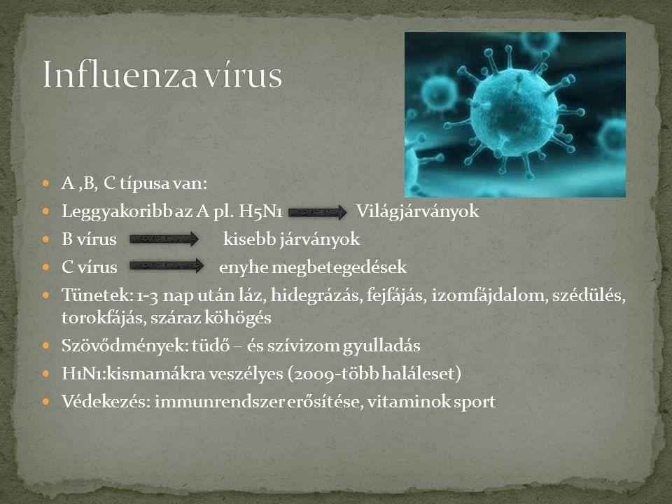 Influenza vírus A ,B, C típusa van: