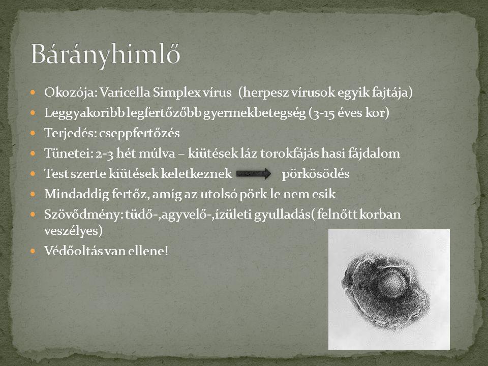 Bárányhimlő Okozója: Varicella Simplex vírus (herpesz vírusok egyik fajtája) Leggyakoribb legfertőzőbb gyermekbetegség (3-15 éves kor)