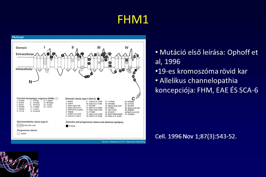FHM1 Mutáció első leírása: Ophoff et al, 1996