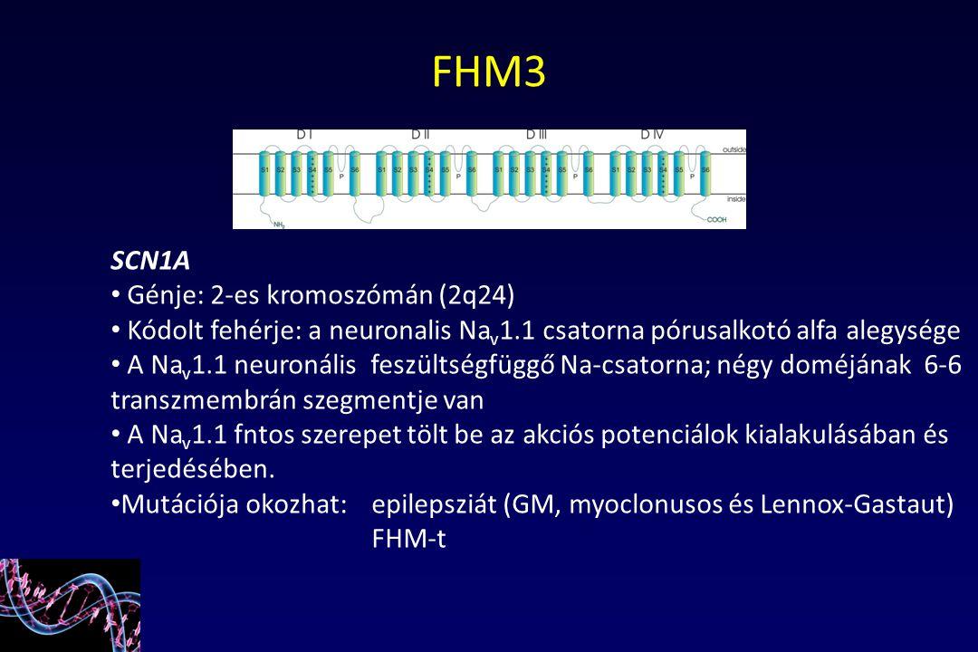 FHM3 SCN1A Génje: 2-es kromoszómán (2q24)