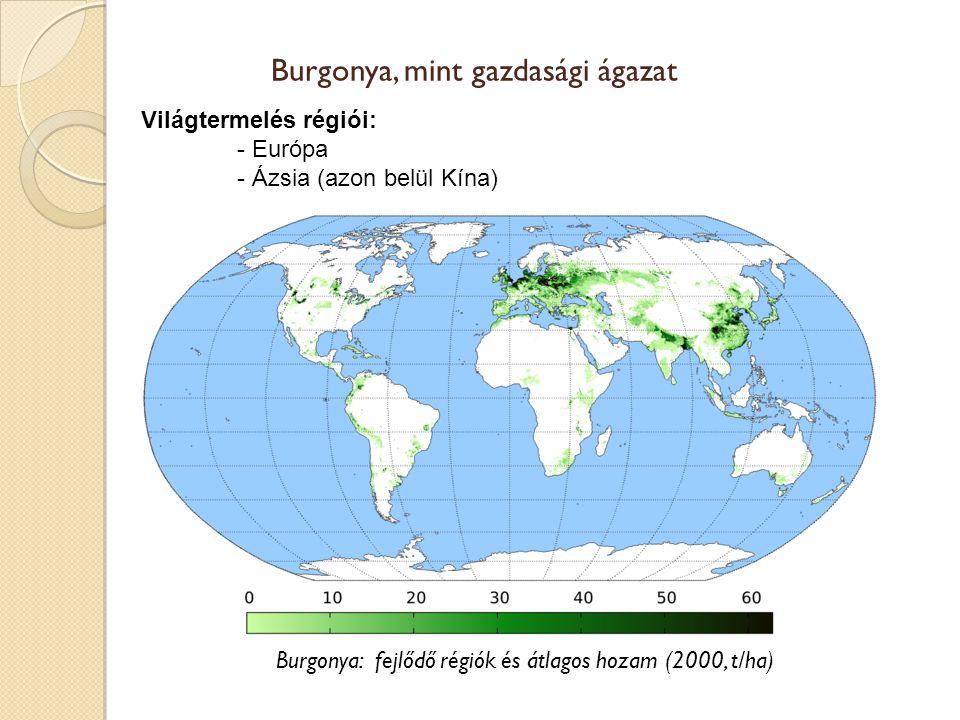 Burgonya, mint gazdasági ágazat