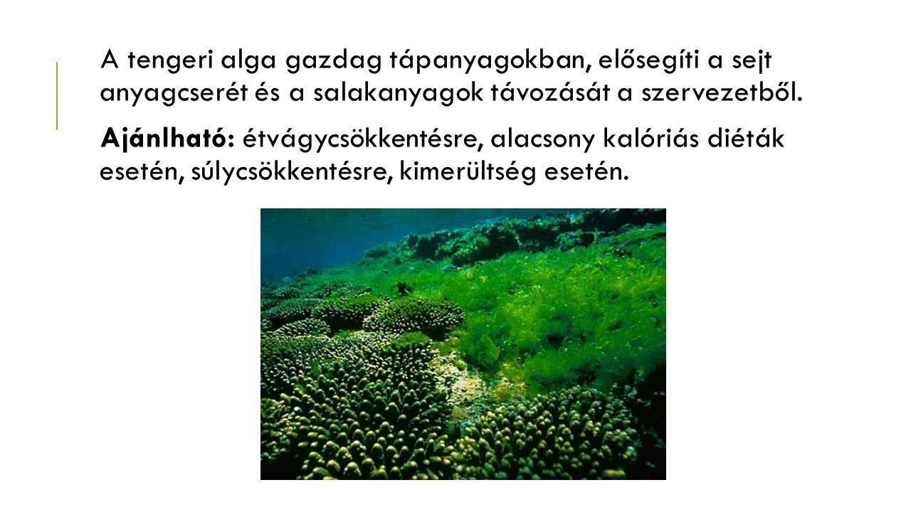 A tengeri alga gazdag tápanyagokban, elősegíti a sejt anyagcserét és a salakanyagok távozását a szervezetből.