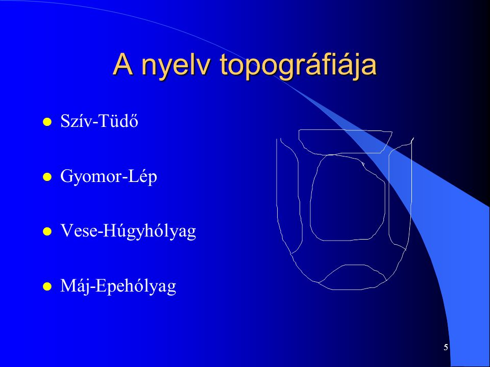 A nyelv topográfiája Szív-Tüdő Gyomor-Lép Vese-Húgyhólyag