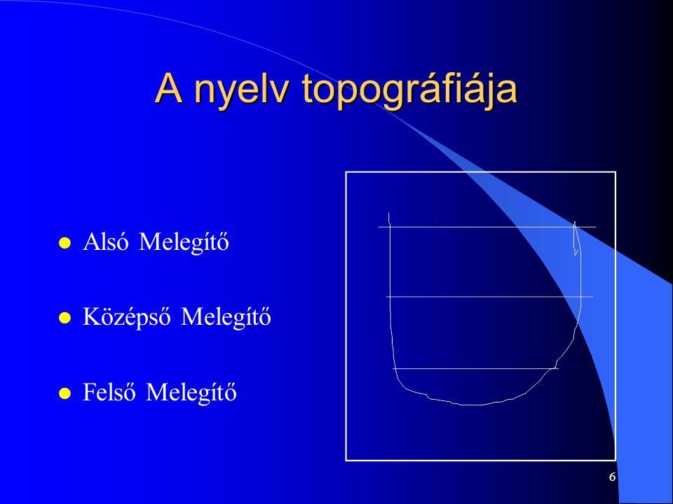 A nyelv topográfiája Alsó Melegítő Középső Melegítő Felső Melegítő