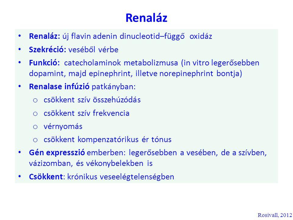 Renaláz Renaláz: új flavin adenin dinucleotid–függő oxidáz