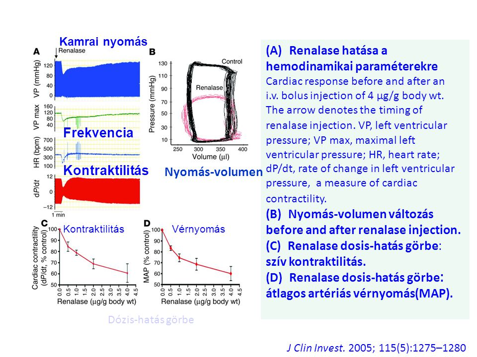 (B) Nyomás-volumen változás before and after renalase injection.
