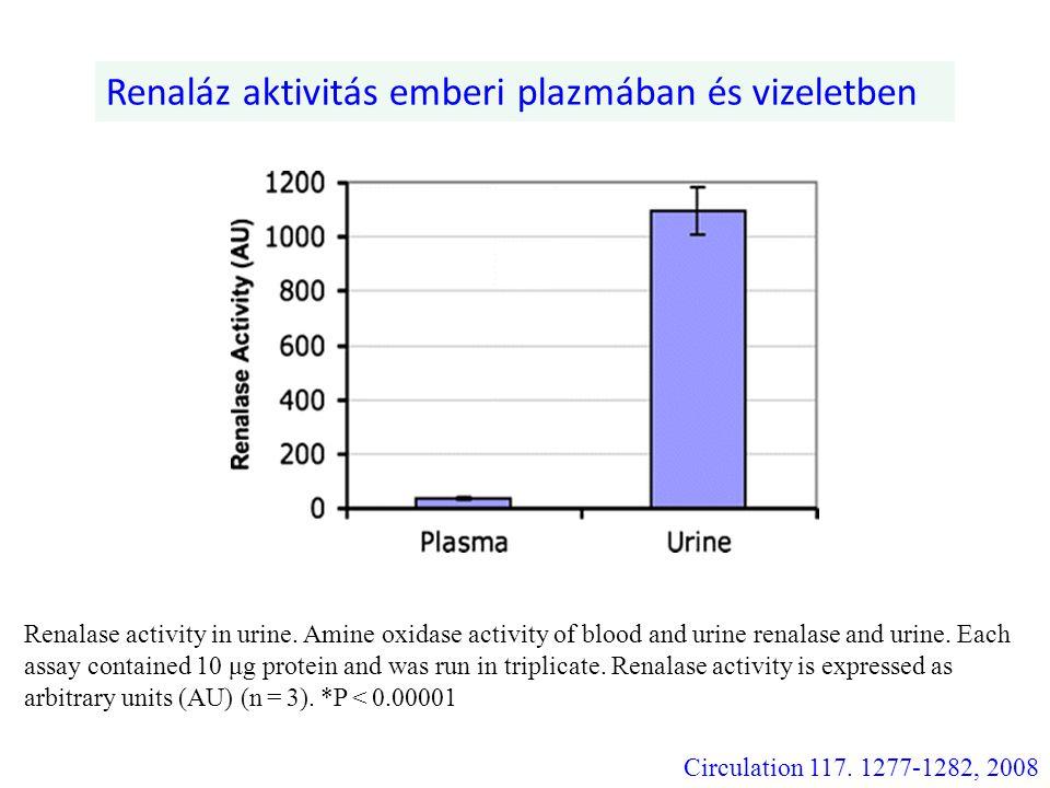 Renaláz aktivitás emberi plazmában és vizeletben