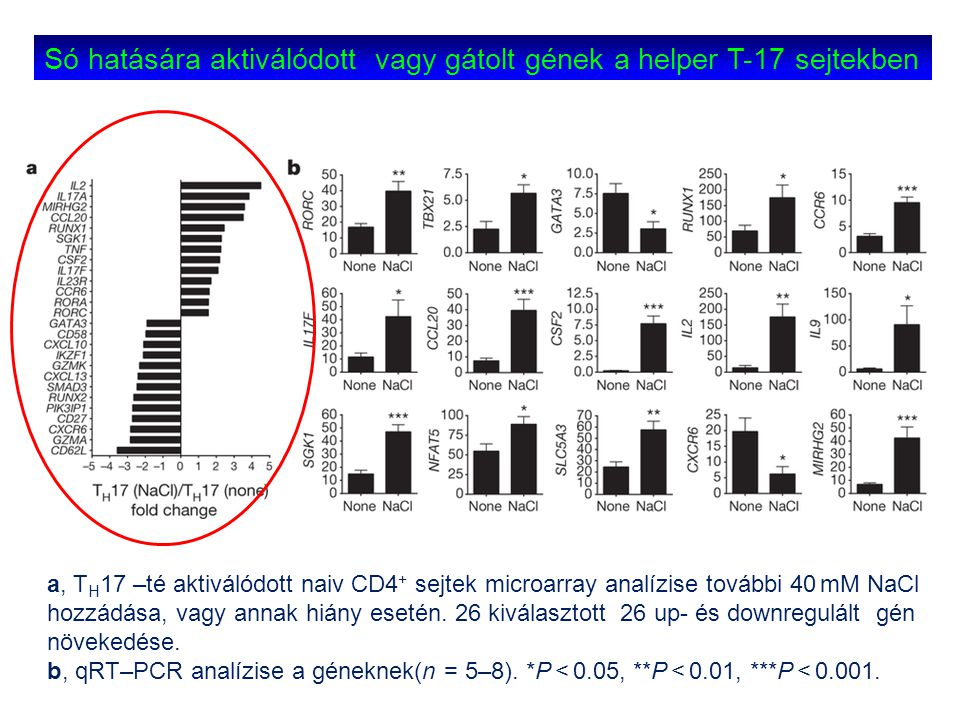 Só hatására aktiválódott vagy gátolt gének a helper T-17 sejtekben