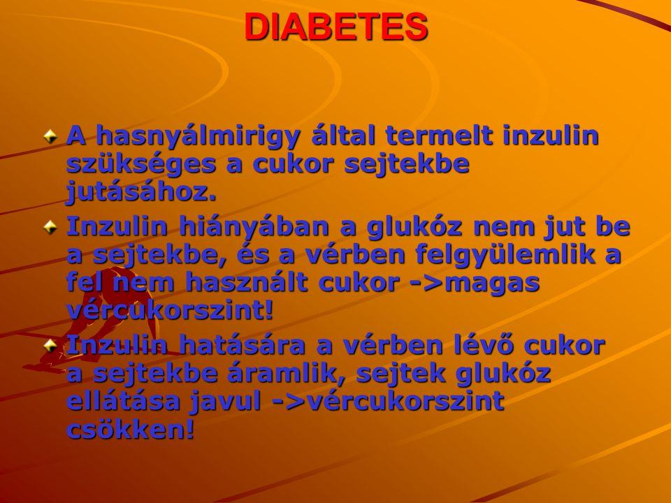 DIABETES A hasnyálmirigy által termelt inzulin szükséges a cukor sejtekbe jutásához.