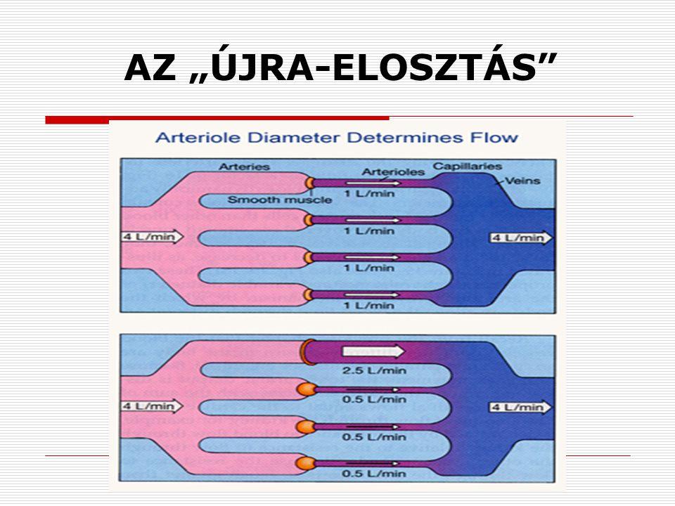 """AZ """"ÚJRA-ELOSZTÁS"""