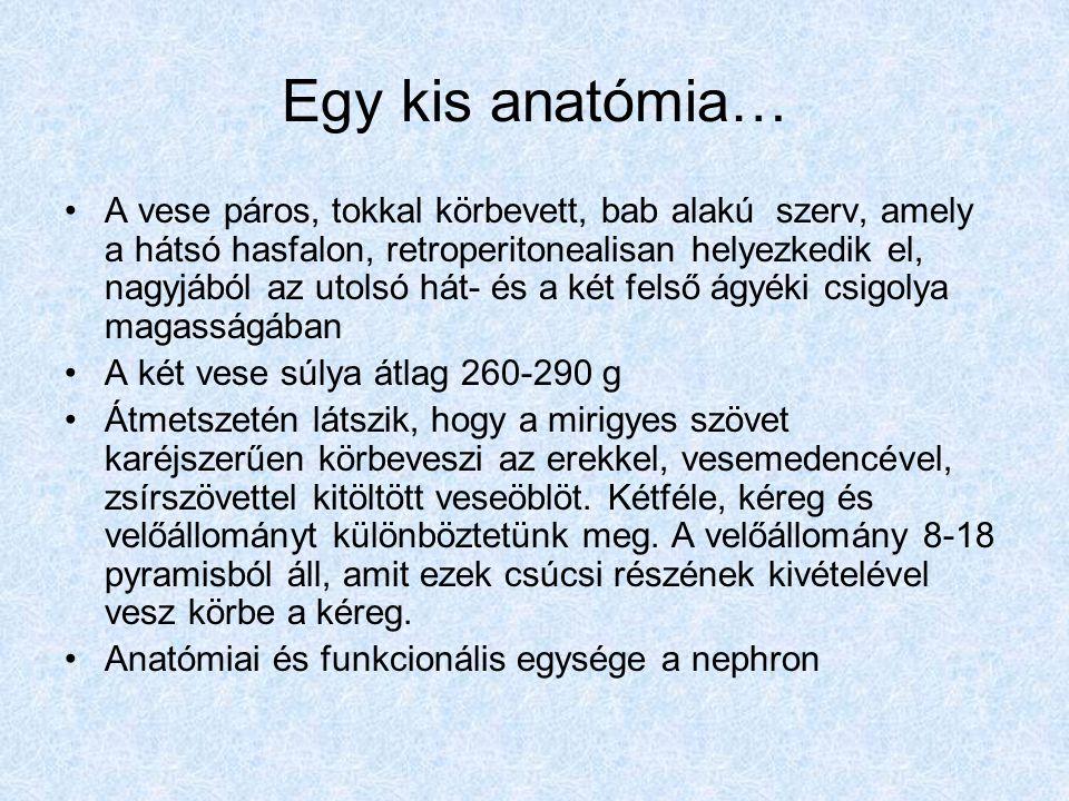 Egy kis anatómia…