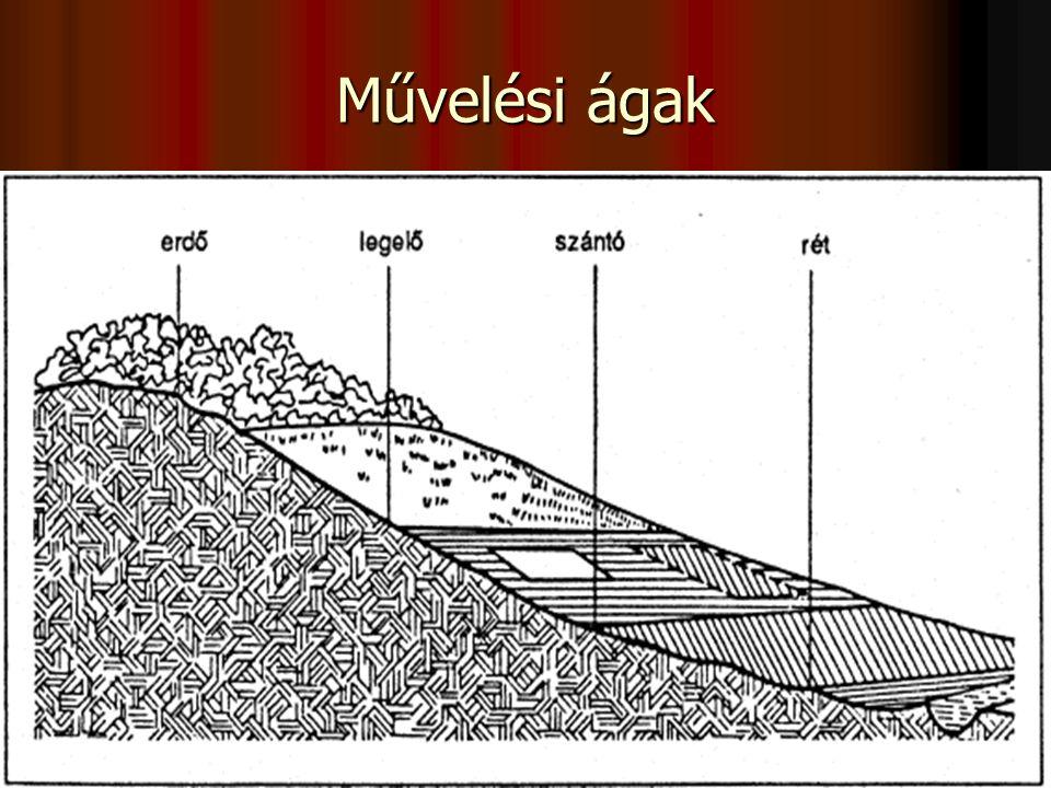 Művelési ágak Földrendezés: a művelési ágak arányának és helyének meghatározása. Művelési ágak: Szántó.