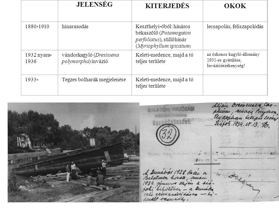 JELENSÉG KITERJEDÉS OKOK 1880-1910 hinarasodás