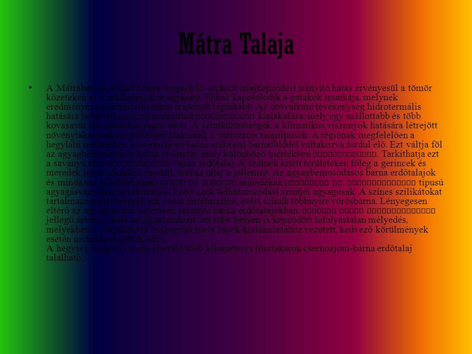 Mátra Talaja
