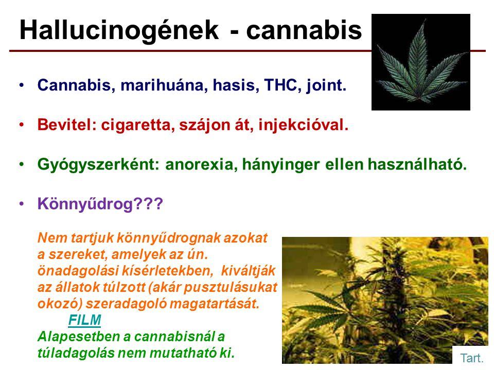 Hallucinogének - cannabis