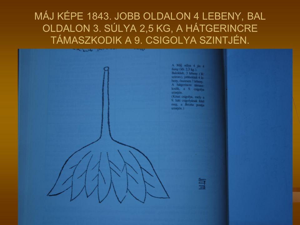 MÁJ KÉPE 1843. JOBB OLDALON 4 LEBENY, BAL OLDALON 3