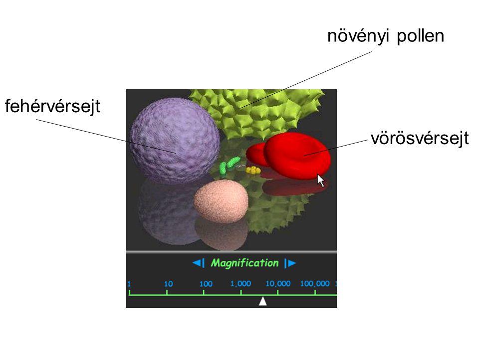 növényi pollen fehérvérsejt vörösvérsejt 18