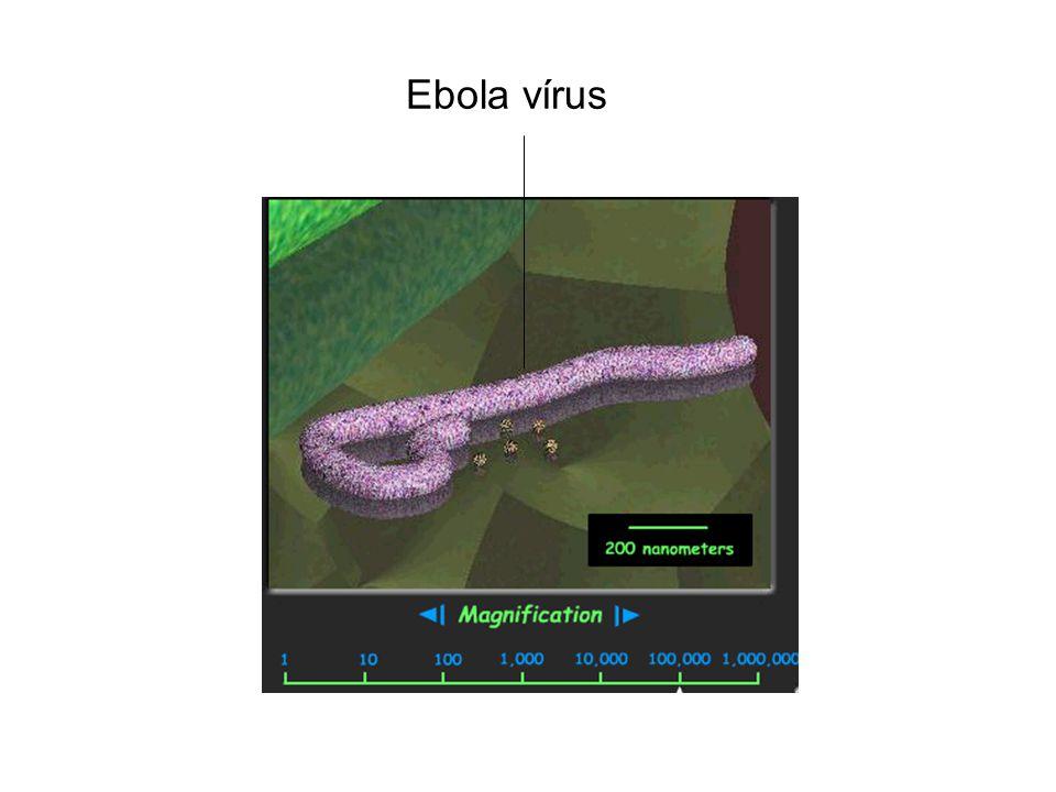 Ebola vírus 22