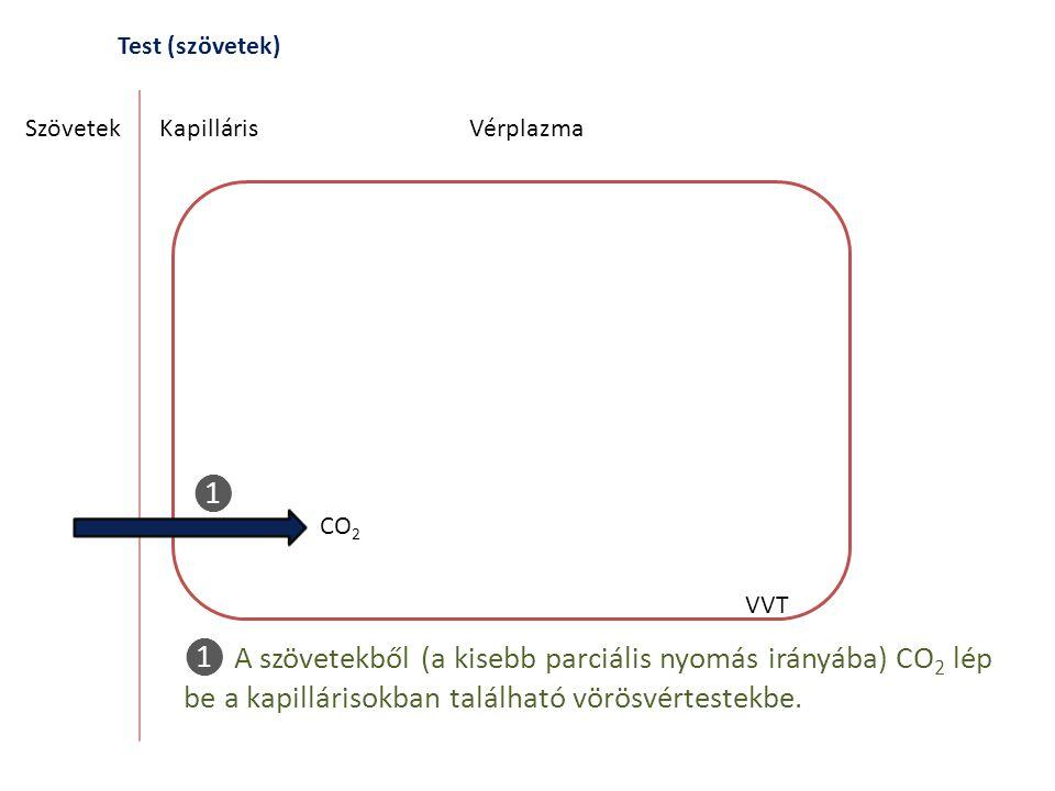 Test (szövetek) Szövetek. Kapilláris. Vérplazma. ❶. CO2. VVT.