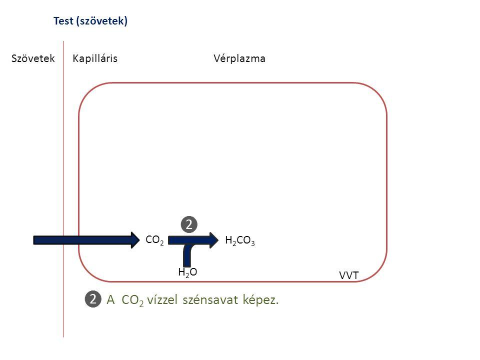 ❷ A CO2 vízzel szénsavat képez.