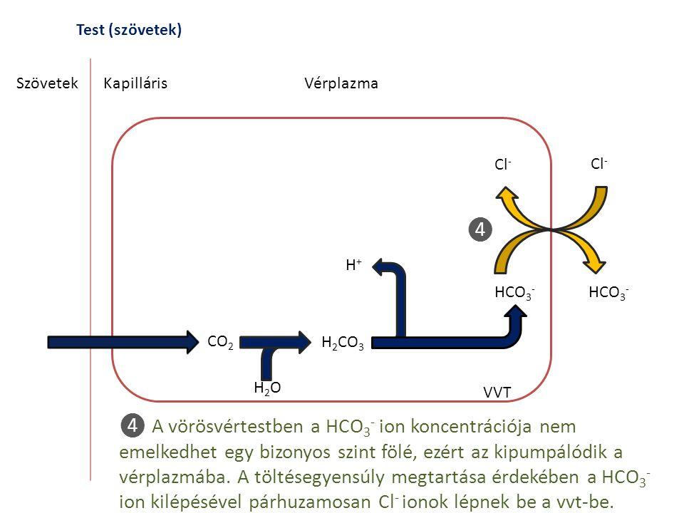 Test (szövetek) Szövetek. Kapilláris. Vérplazma. Cl- Cl- ❹. H+ HCO3- HCO3- CO2. H2CO3. H2O.