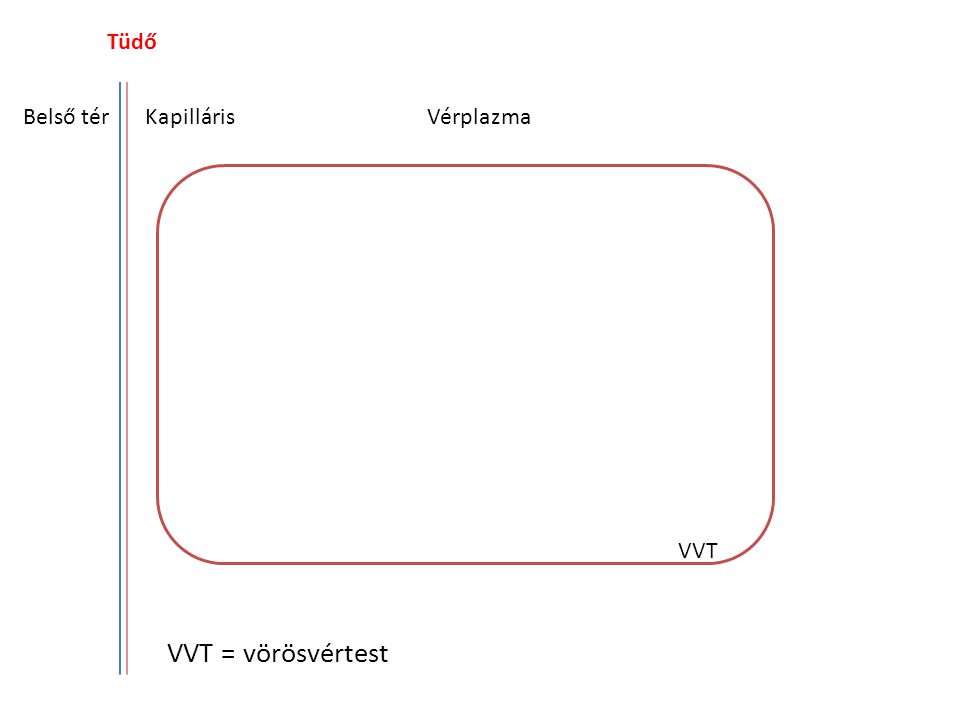 Tüdő Belső tér Kapilláris Vérplazma VVT VVT = vörösvértest