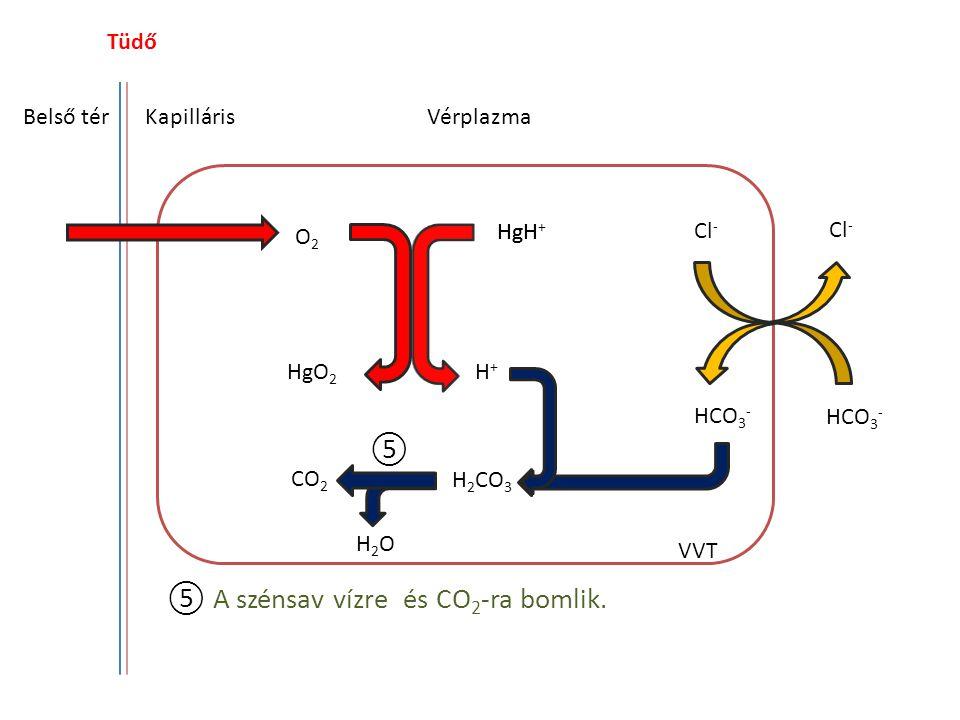 ⑤ A szénsav vízre és CO2-ra bomlik.