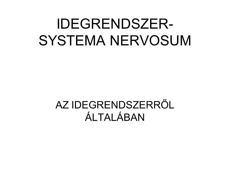 IDEGRENDSZER- SYSTEMA NERVOSUM