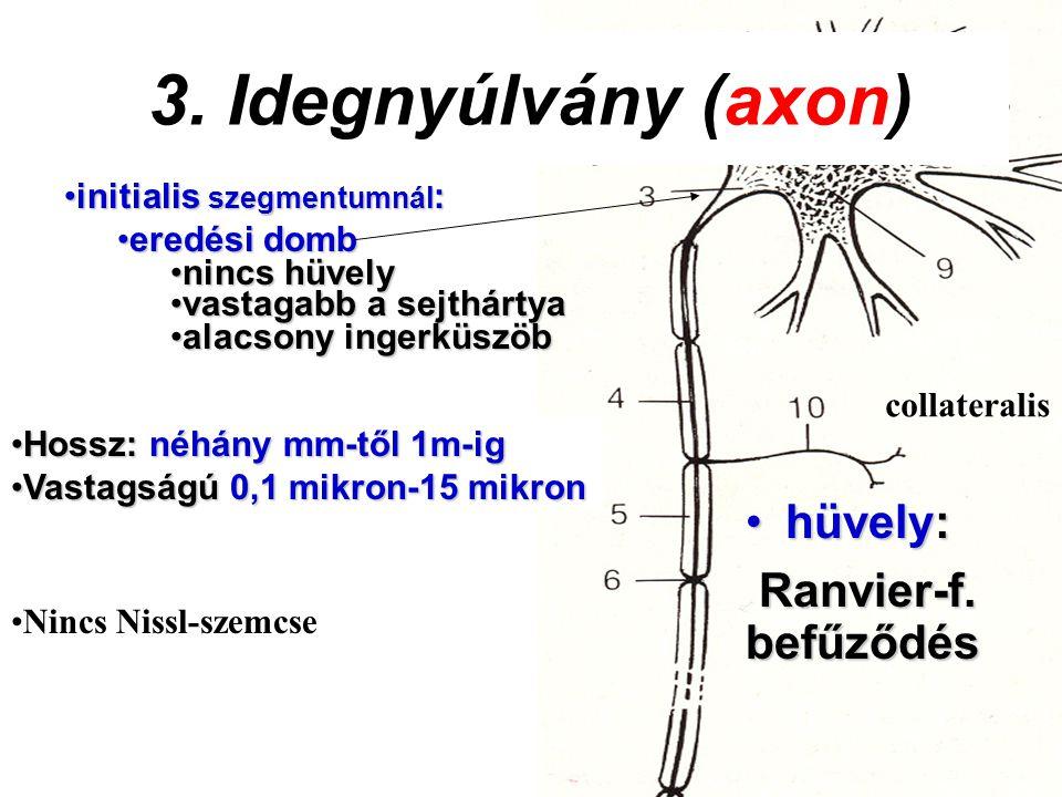 3. Idegnyúlvány (axon) hüvely: Ranvier-f. befűződés