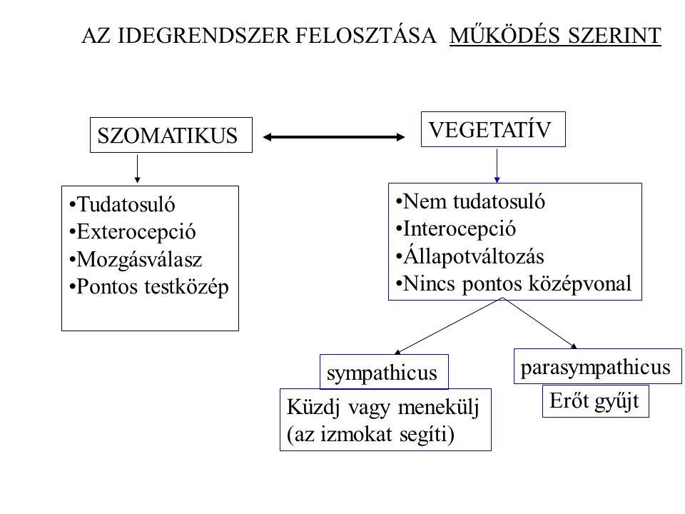 AZ IDEGRENDSZER FELOSZTÁSA MŰKÖDÉS SZERINT