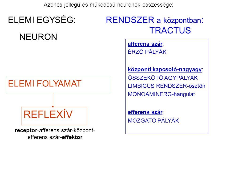REFLEXÍV ELEMI EGYSÉG: RENDSZER a központban: TRACTUS NEURON