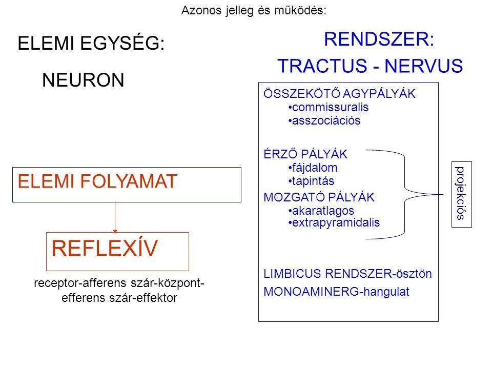 REFLEXÍV RENDSZER: ELEMI EGYSÉG: TRACTUS - NERVUS NEURON