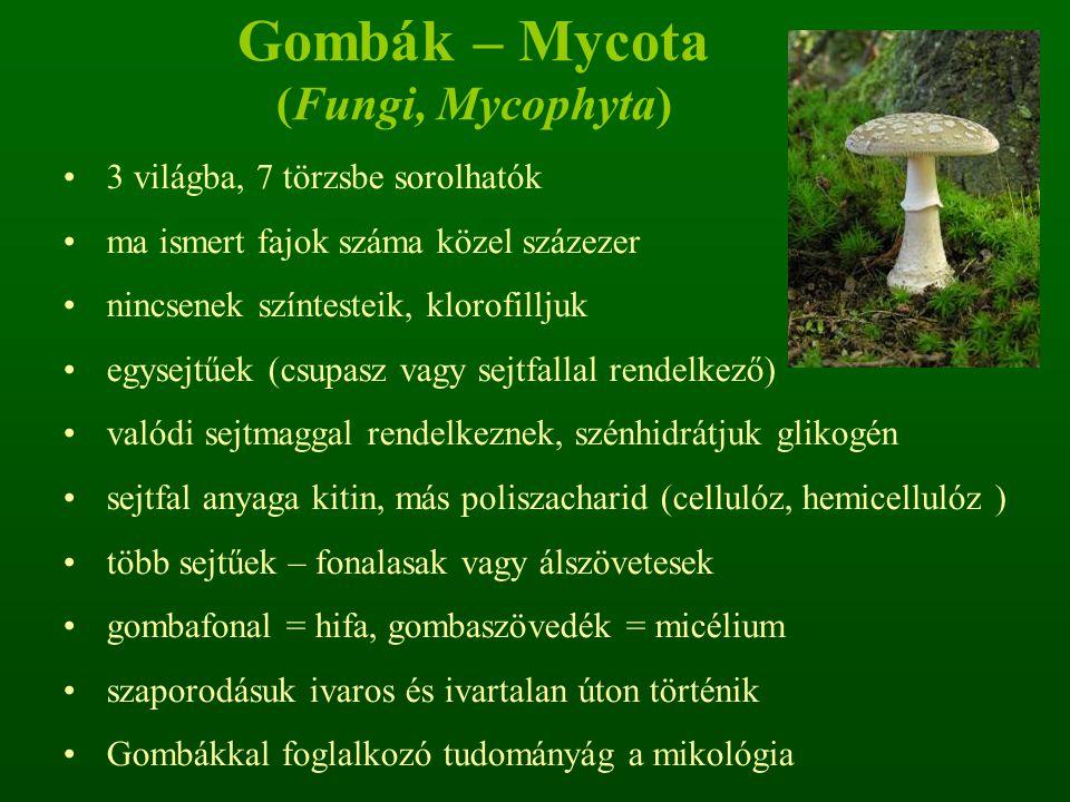 Gombák – Mycota (Fungi, Mycophyta)
