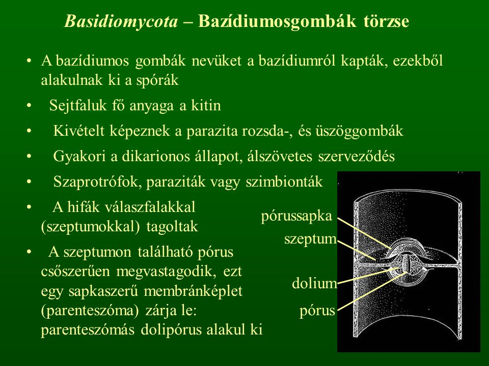 Basidiomycota – Bazídiumosgombák törzse
