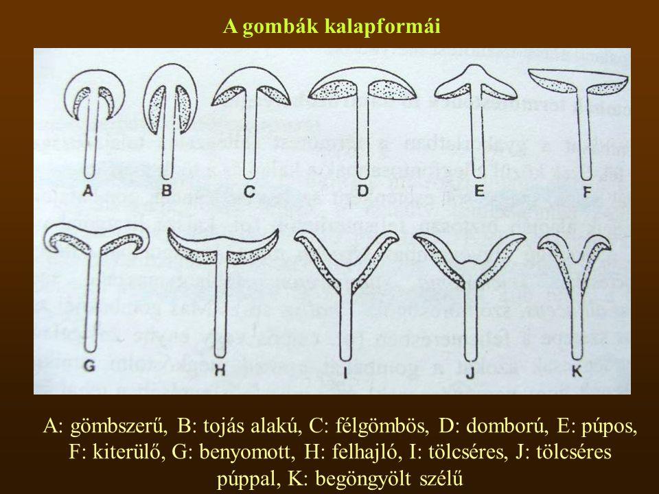 A gombák kalapformái