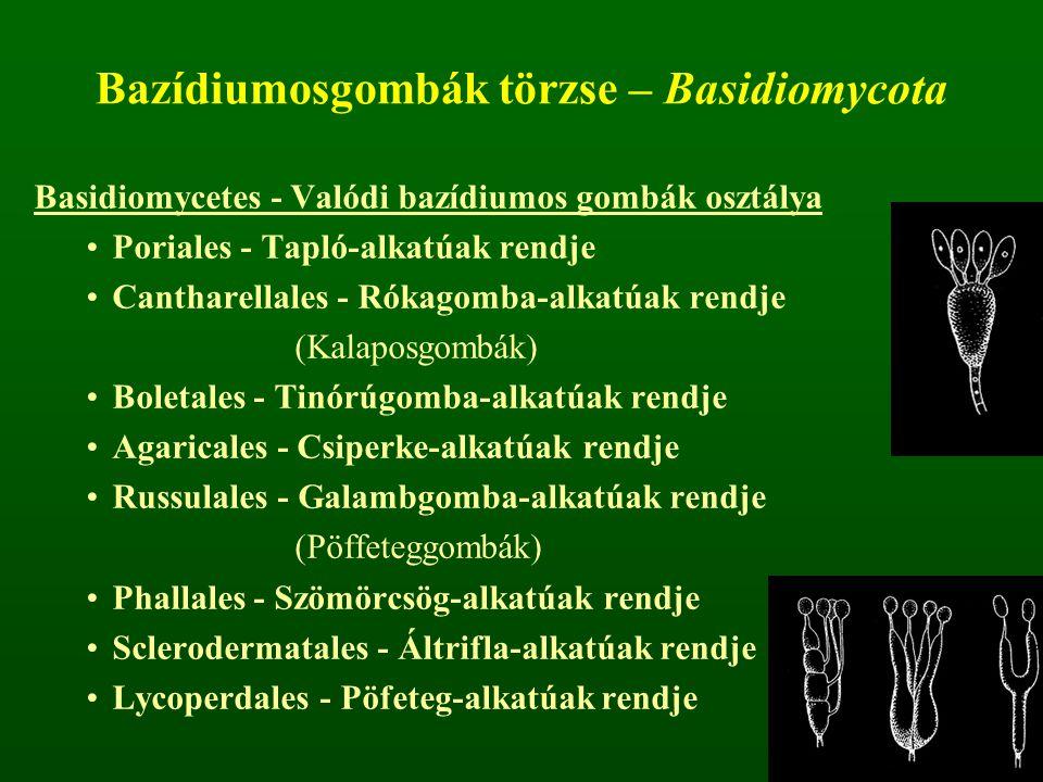 Bazídiumosgombák törzse – Basidiomycota