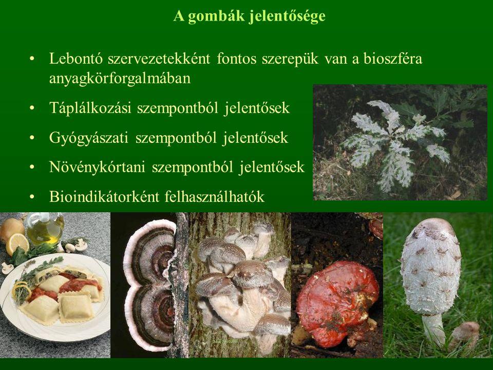 A gombák jelentősége Lebontó szervezetekként fontos szerepük van a bioszféra anyagkörforgalmában. Táplálkozási szempontból jelentősek.