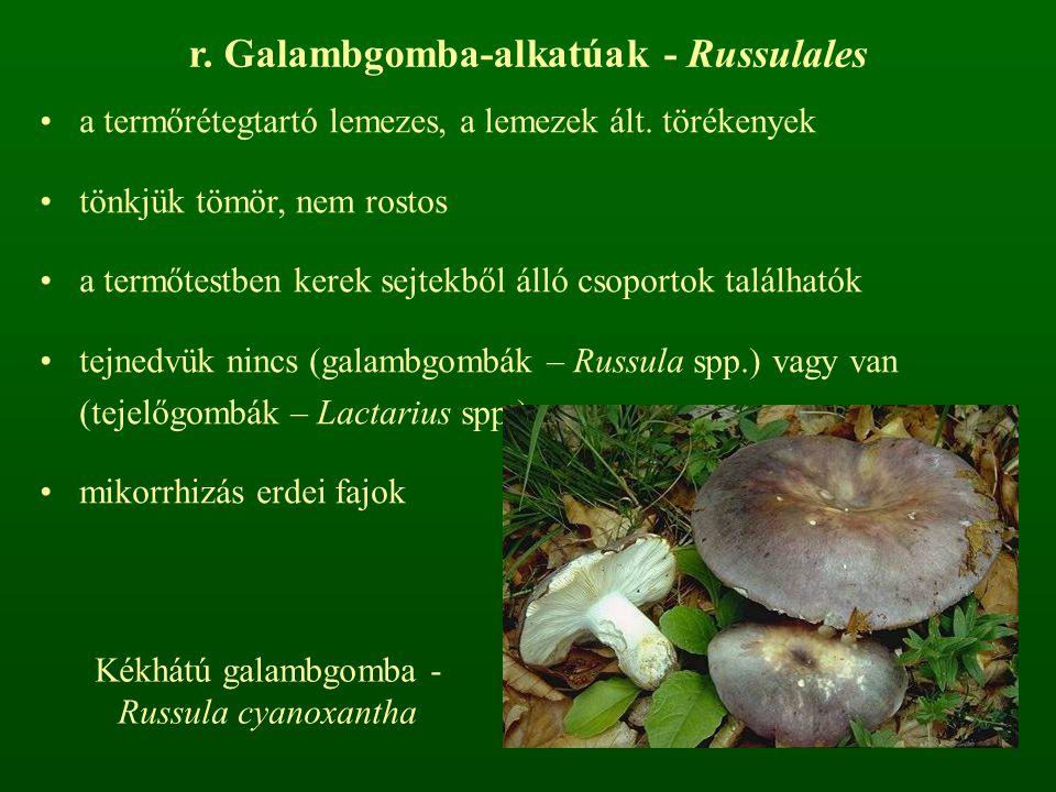 r. Galambgomba-alkatúak - Russulales