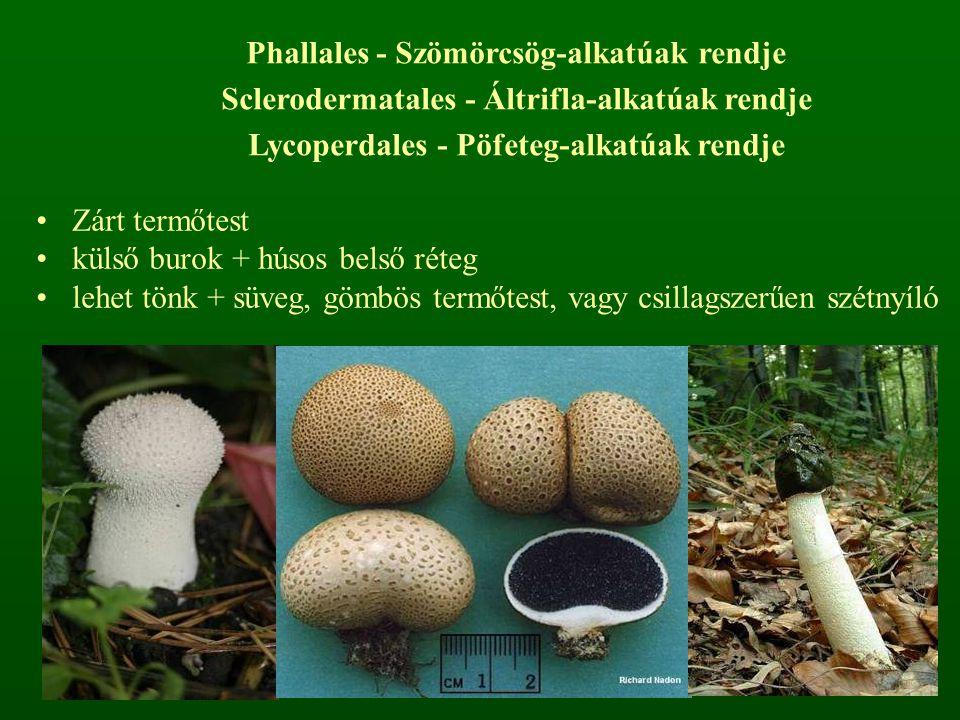 Lycoperdales - Pöfeteg-alkatúak rendje