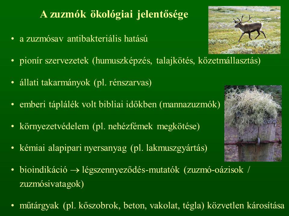 A zuzmók ökológiai jelentősége