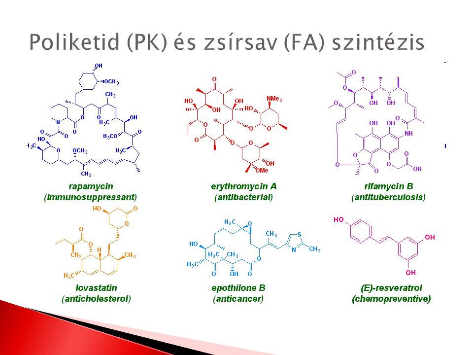Poliketid (PK) és zsírsav (FA) szintézis