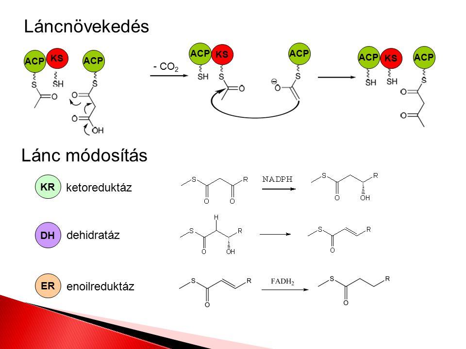 Láncnövekedés Lánc módosítás ketoreduktáz dehidratáz enoilreduktáz
