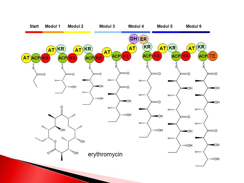 erythromycin TE DH ER KR KR KR AT AT KR AT KR AT AT AT AT Start
