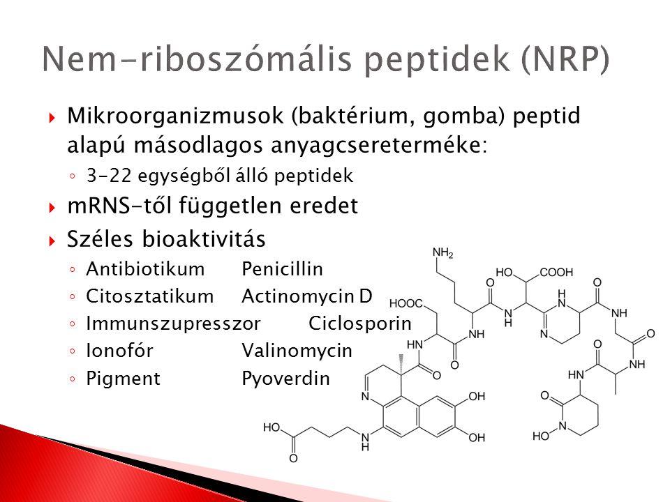 Nem-riboszómális peptidek (NRP)