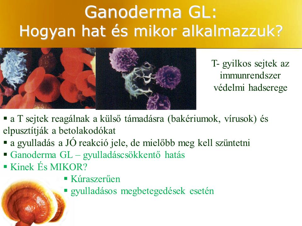 Ganoderma GL: Hogyan hat és mikor alkalmazzuk
