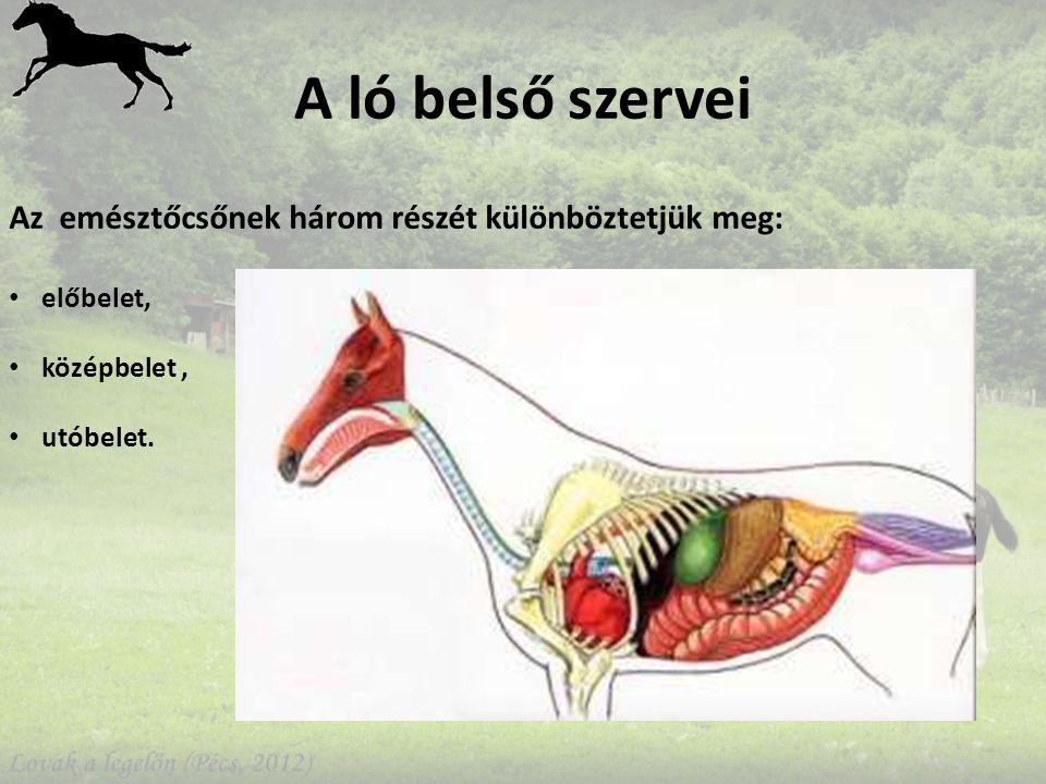 A ló belső szervei Az emésztőcsőnek három részét különböztetjük meg: