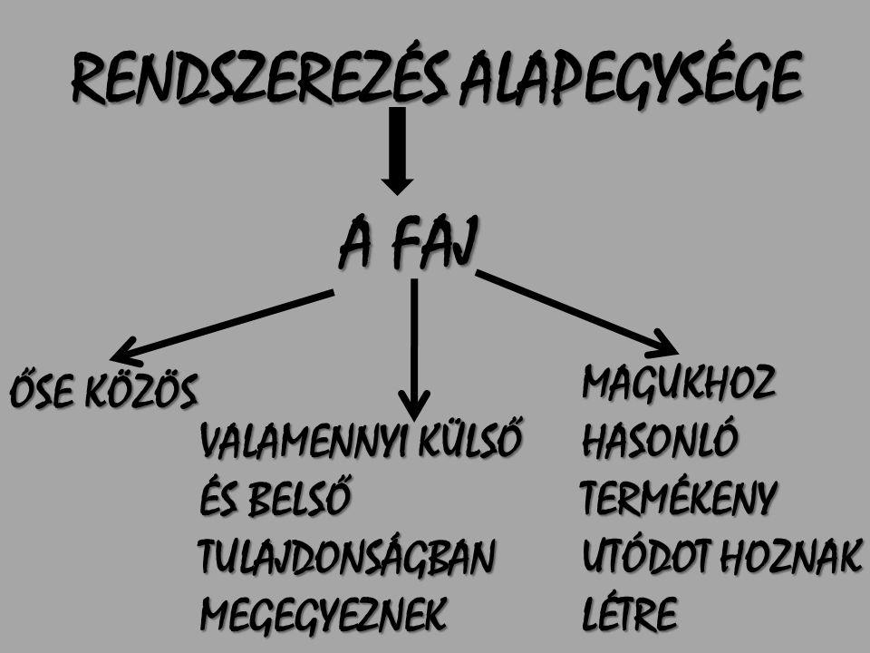 RENDSZEREZÉS ALAPEGYSÉGE